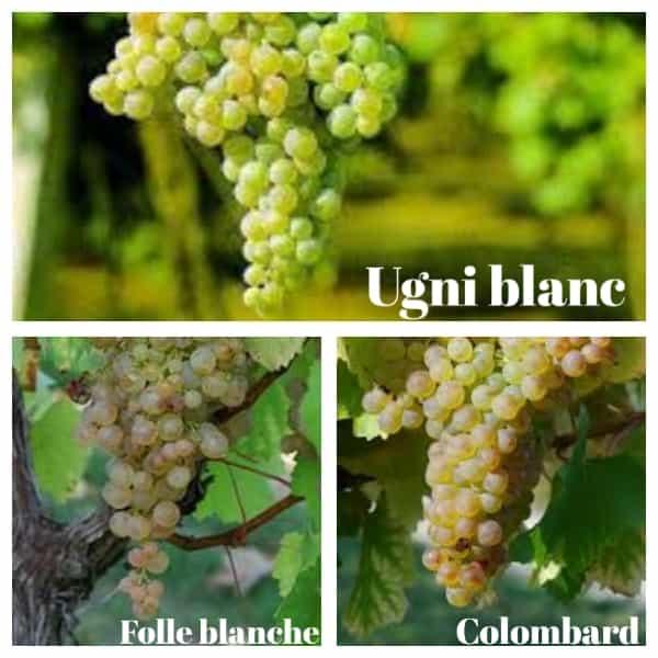 tipos de uvas utilizadas en el coñac